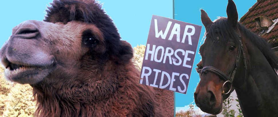 mobile renaissance animal rides 1